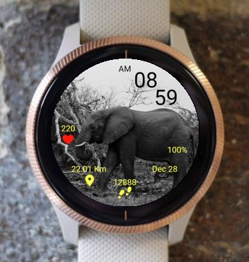 Garmin Watch Face - Elephant