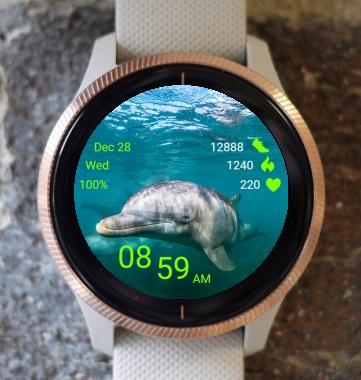 Garmin Watch Face - Dolphin 03